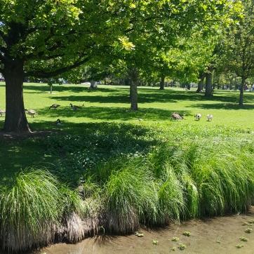 Wash Park Creek