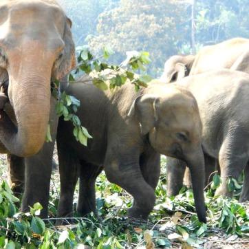 elephantR