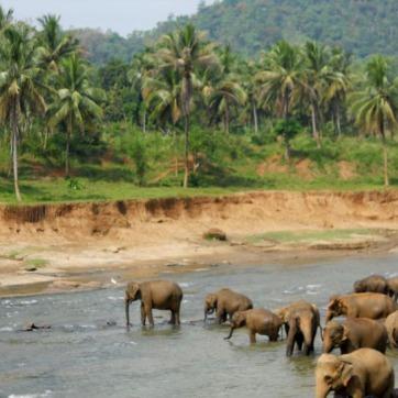 srilankaeleR